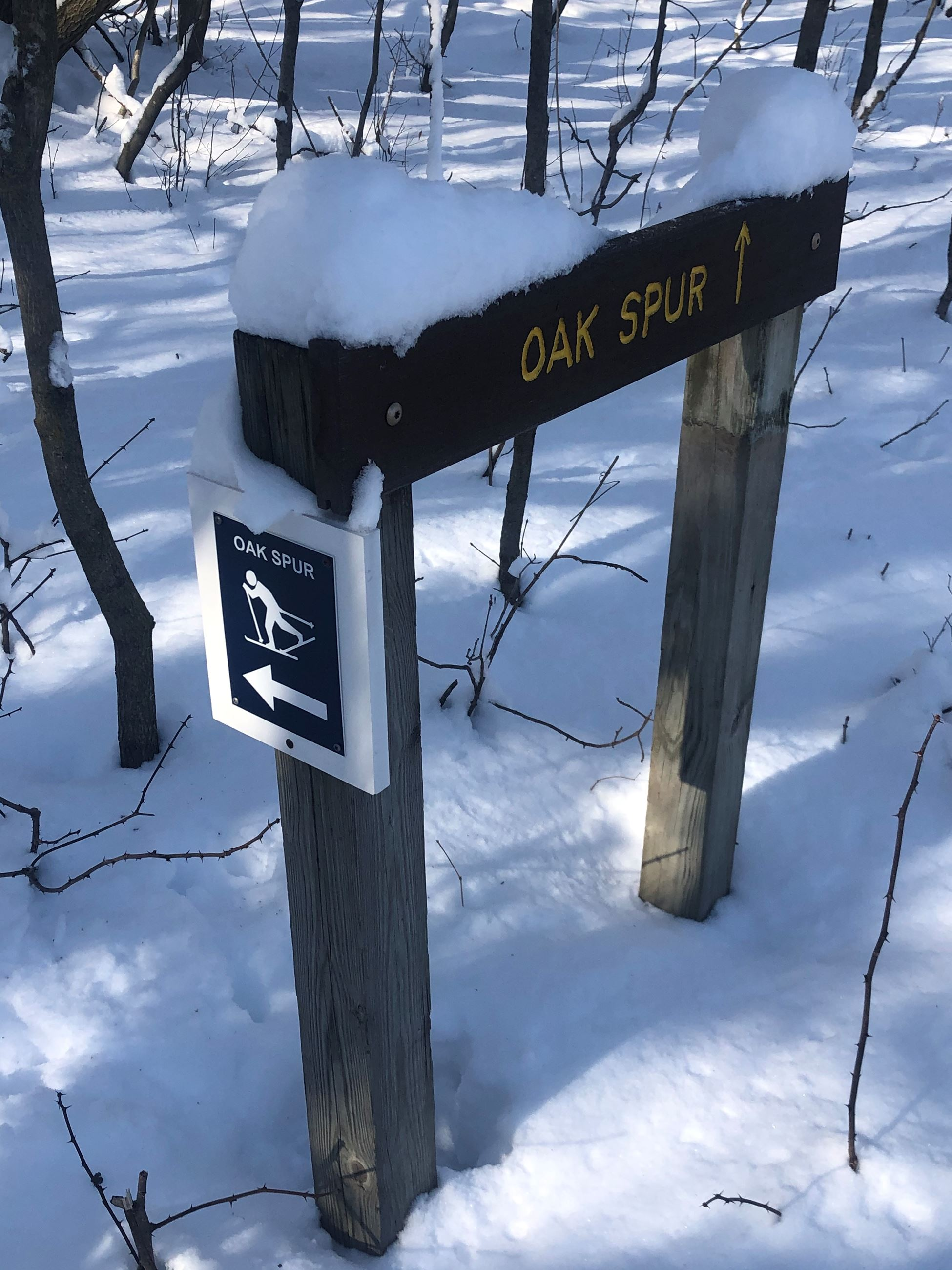 A brown trail sign that says 'Oak Spur' with a blue and white cross country ski sign on the si